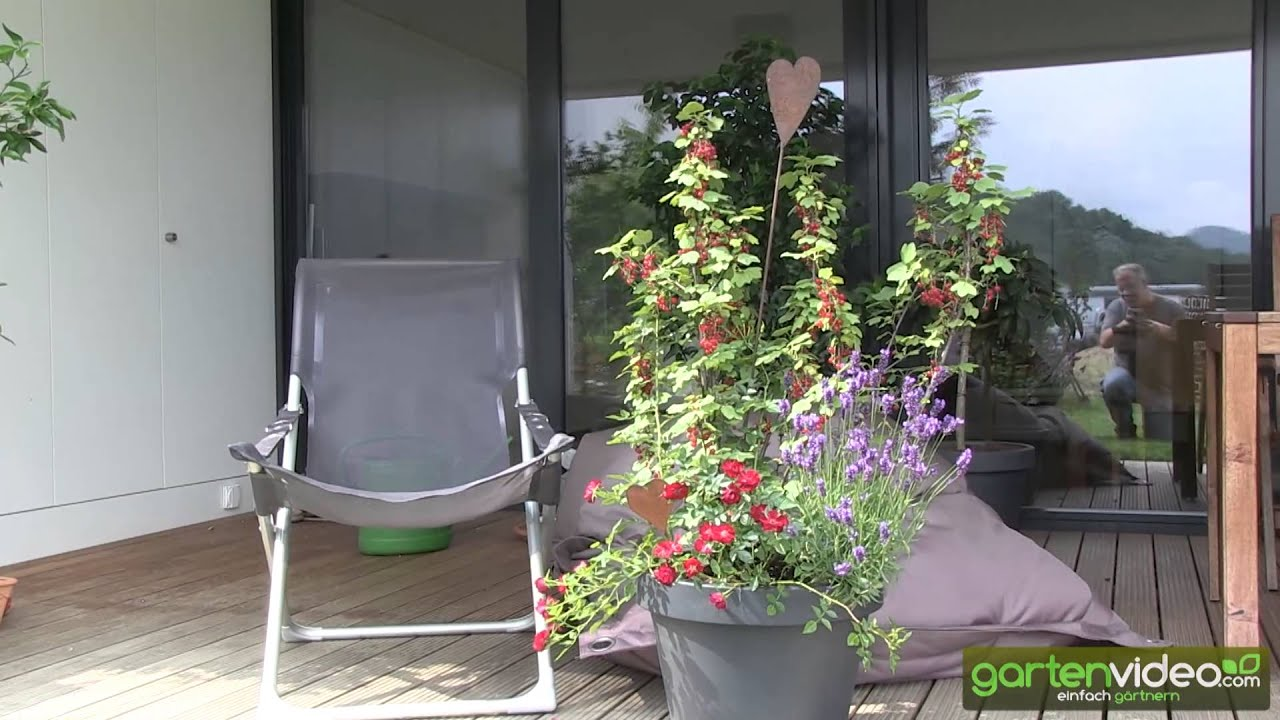 pflanzbeispiel johannisbeeren mit lavendel und rosen im k bel youtube. Black Bedroom Furniture Sets. Home Design Ideas