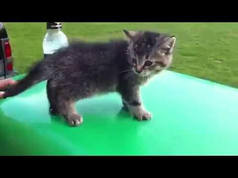 Кот испугался и смешно упал)))