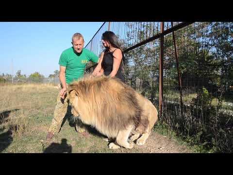 Обнимашки с львом Марселем !Девушка в шоке !!!