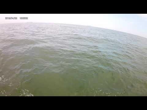 Jetski And Dolphins Virginia Beach