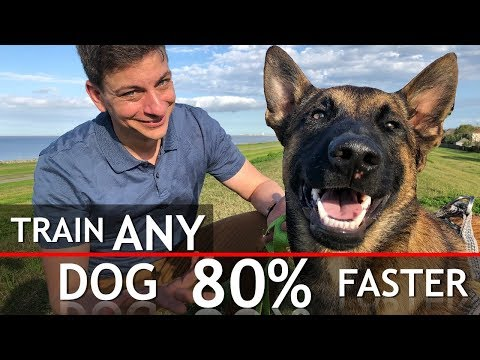 4 Things That WILL Train Any Dog 80% Faster
