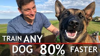 4-things-that-will-train-any-dog-80-faster