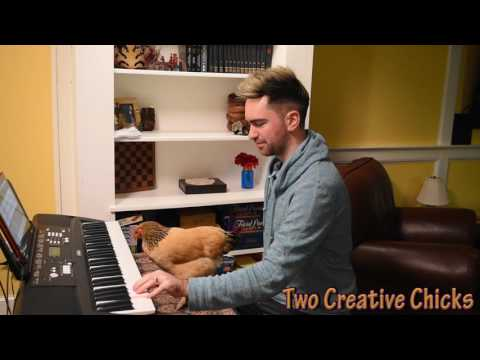 Chicken Playing Heart and Soul Keyboard Piano Duet
