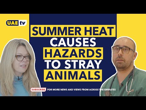 PROTECT YOUR PETS FROM THE SUMMER HEAT   UAE TV