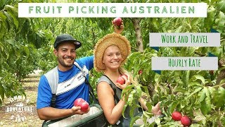 Fruit Picking in Südaustralien - #20