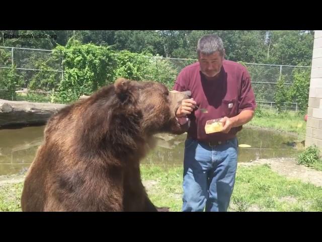 Jimbo and Leo eating honeycomb