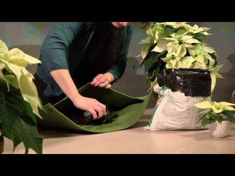 Des idées de décoration pour la maison : jardin mural de poinsettias