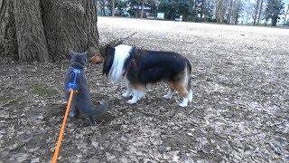 犬、猫、猿(人間)で行進.