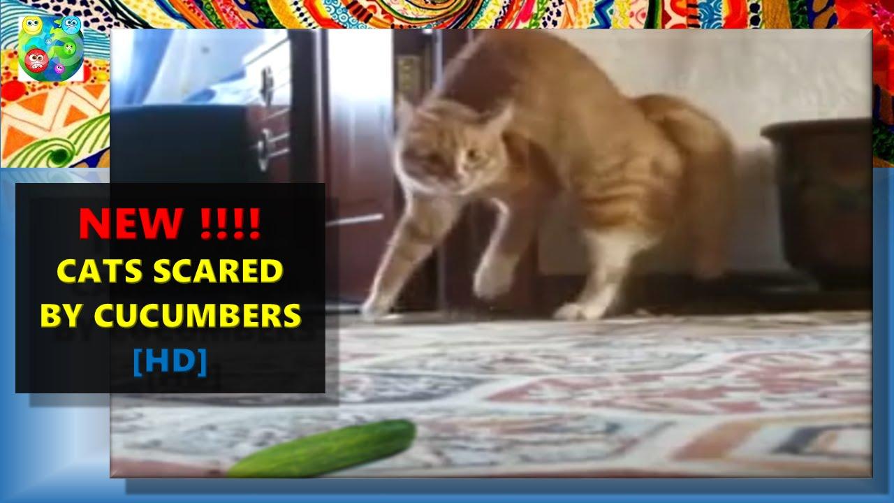 Cat And Zucchini Video