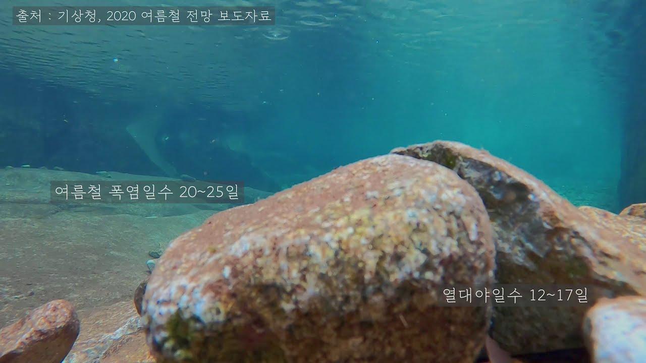 집중력을 높여주는 물고기 영상 ASMR l 공부 백색소음 소리통계 ep3