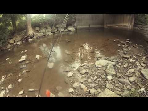 Calling Topwater Shots with Seth (Pennsylvania Creek Fishing)