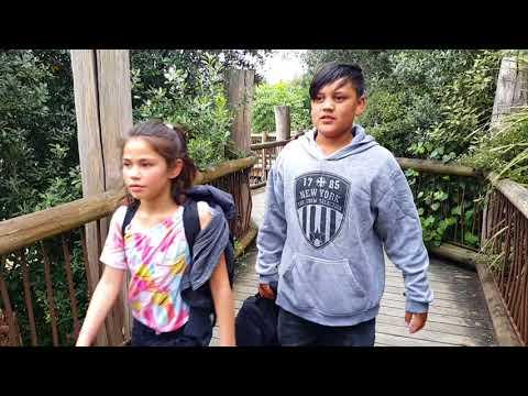 Manaia View School, Y5-6 Auckland Zoo Trip, 2017