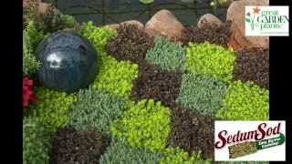 SedumSod and SodPod Sedum-Ultimate in Dig Free Gardening