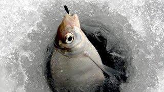 Коромысло уловистая оснастка для зимней рыбалки Как сделать Как работает