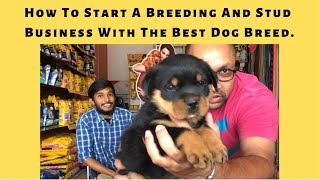 How To Start A Breeding And Stud Business With The Best Dog Breed