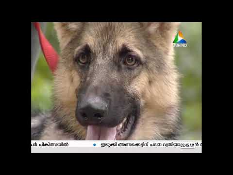 crate training and food manners in dog training (varun and pet)