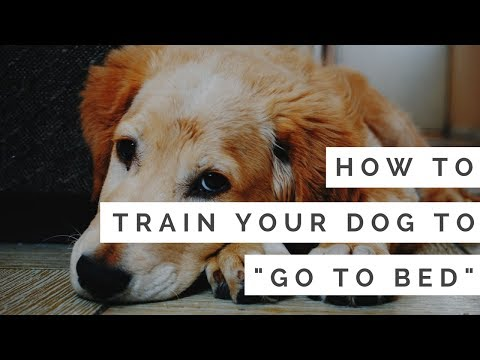 """How to Train Your Dog to """"Go to Bed"""" (in under 5 minutes)"""