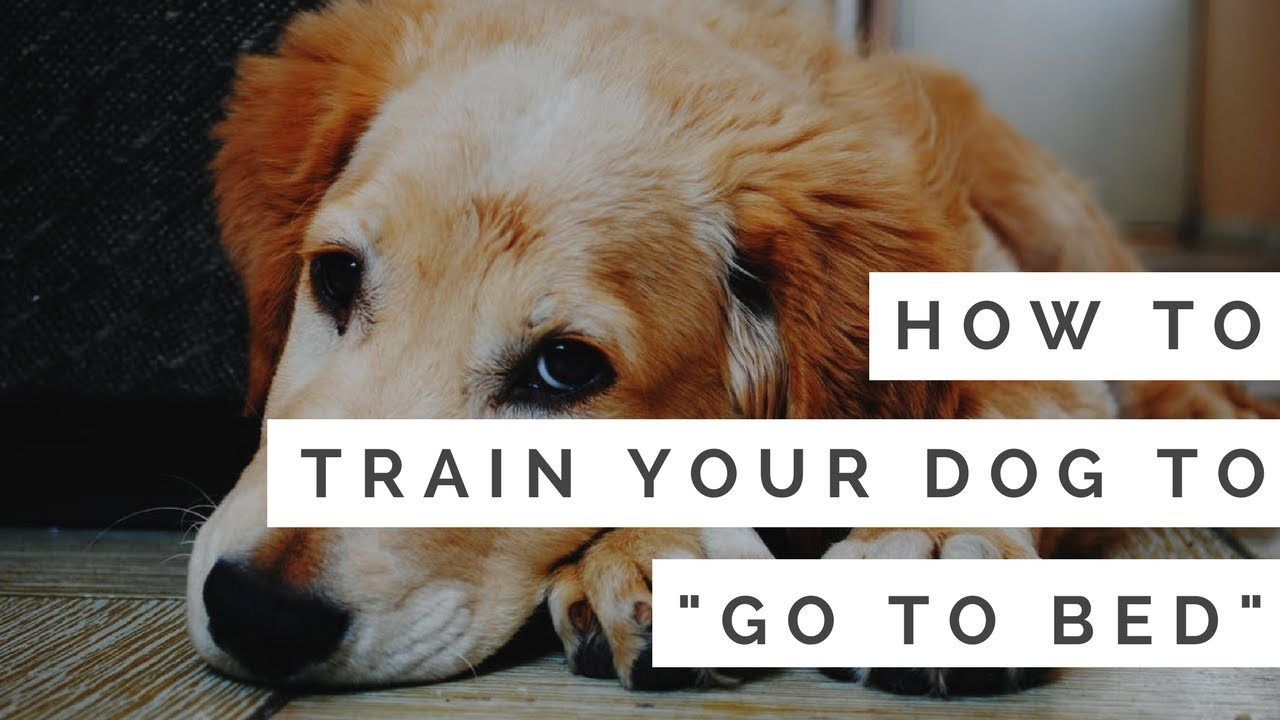 How To Train Your Dog To Quot Go To Bed Quot In Under 5 Minutes