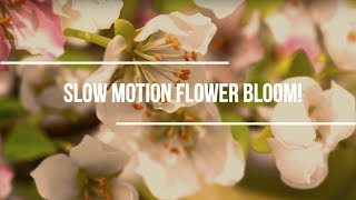 Slow motion Flower Bloom!