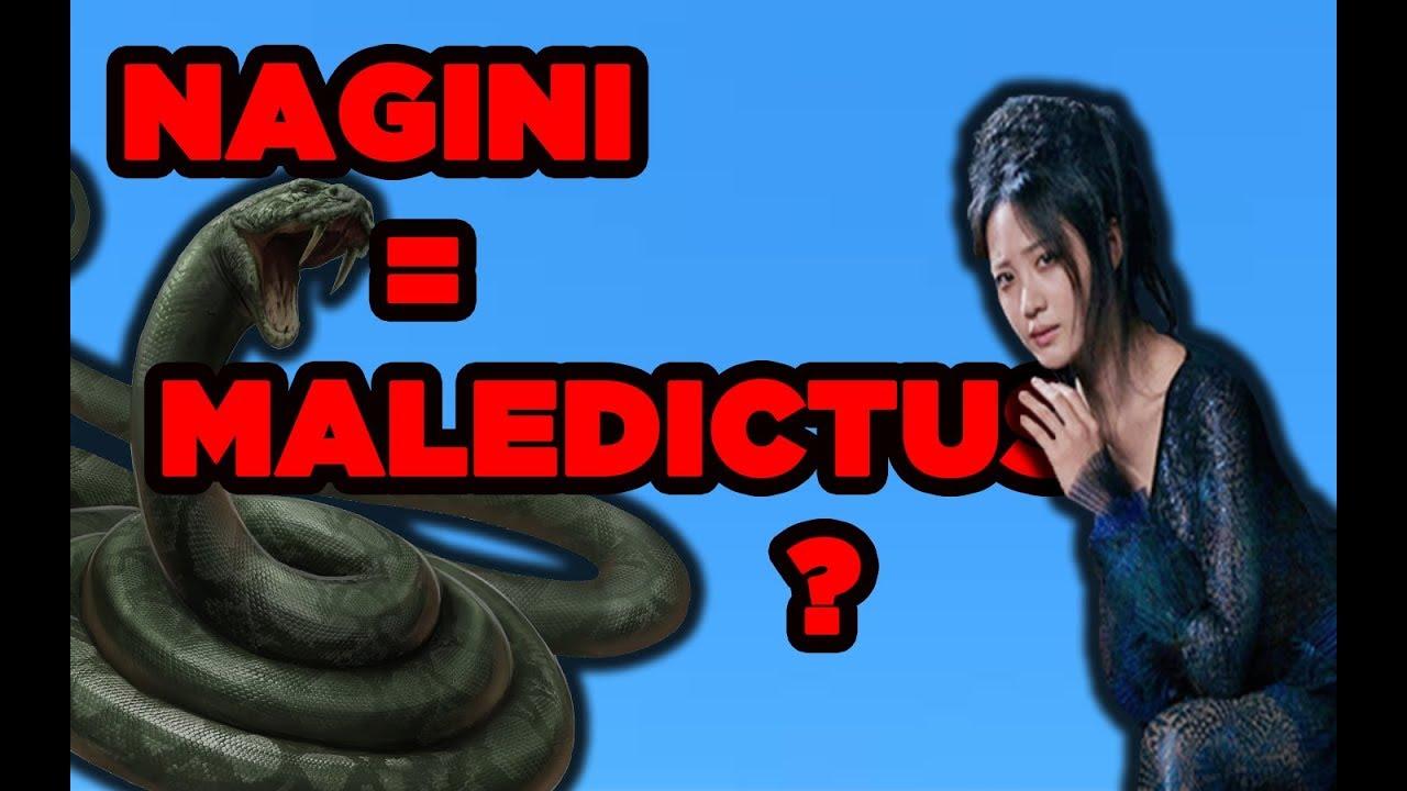 Maledictus