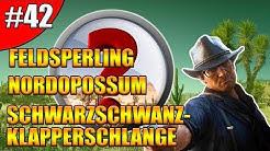 Feldsperling | Nordopossum | Schwarzschwanz-Klapperschlange - RDR2 Zoologe | Unter die Haut - #42