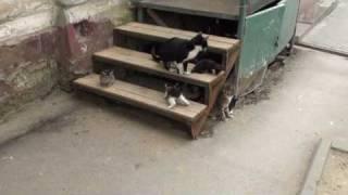 Кошки в магазине