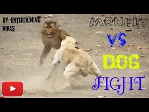 Monkey & dog