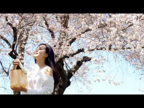 さくらさくら - Sakura Sakura - Japanese traditional folk song
