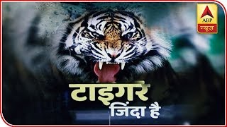 We'll Try To Tranquilize The Man-Eater Tigress, Says Shooter | ABP News