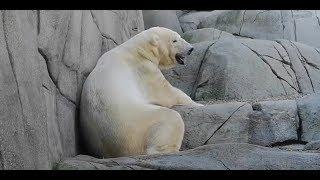 """Пингвины, морские котики, полярные медведи в Гамбургском зоопарке """"Хагенбек"""""""