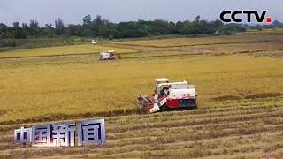 [中国新闻] 端牢中国饭碗 代表委员:加快农业科技化 标准化 品牌化建设 | CCTV中文国际