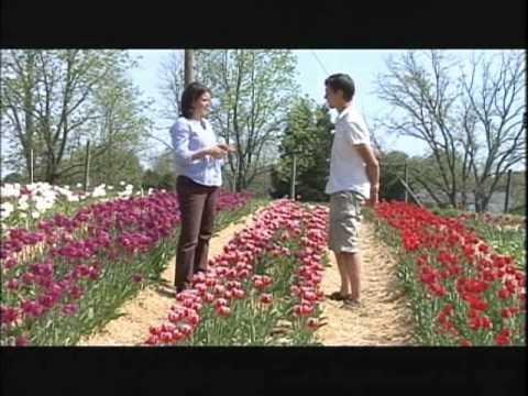 Organic Flowers - Virginia Home Grown Organic Tulip Festival