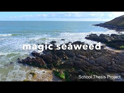Health Benefits, Cooking and Harvesting Seaweed || DRONE - IRELAND