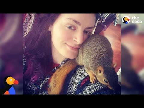 Tiny Rescue Squirrel Is A Huge Troublemaker - MISA | The Dodo