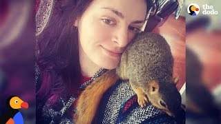 Tiny Rescue Squirrel Is A Huge Troublemaker - MISA | The Dodo thumbnail