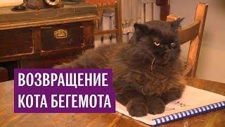 """В Москве нашли пропавшего кота Бегемота из """"Булгаковского дома"""""""
