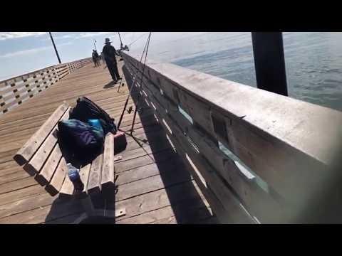 Live..Cayucos Pier Fishing.. Cayucos California