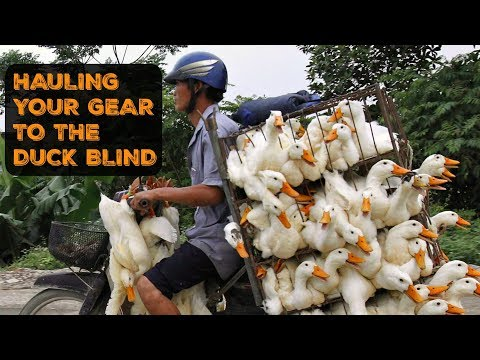 DUCK HUNTING TIPS 4 Tuesday | Hauling Your Gear To The Blind