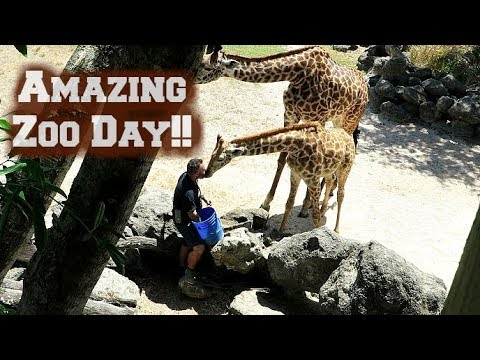 Fun at Brevard Zoo | Vlog