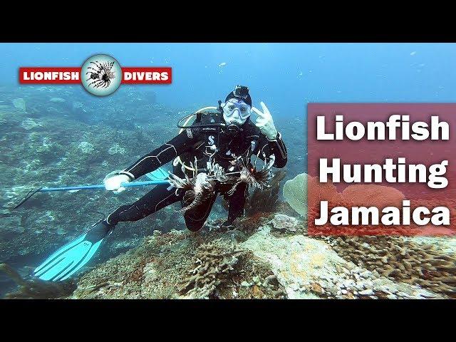 Lionfish Hunting Jamaica - Westmoreland, South Coast