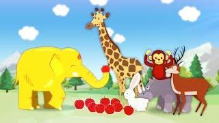 My name is Bru Baby elephant Who is my animal friend like me?
