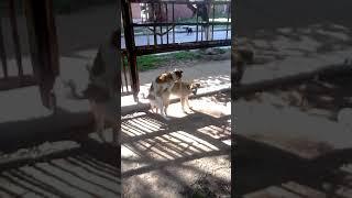 ЖЕСТЬ!!!Собаки занимаются с*ксом