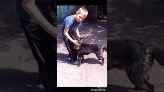 Собака Рекс