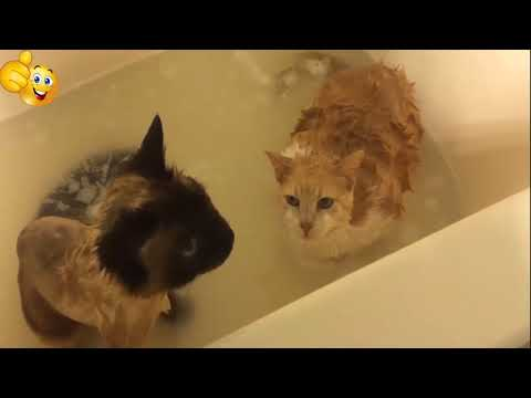 Cats Hate Water! -will make you LAUGH YOUR HEAD OFF  Compilation 2018