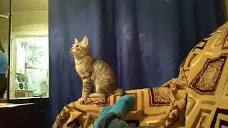 Кот смотрит на крышу и на стены