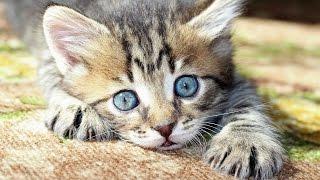 Кошки и их невероятные рекорды - Интересные факты F#CKT ABOUT