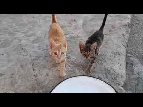 Stray kittens meowing loudly for food