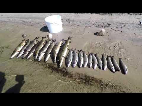 #Рыбалка#Лето#Щука#Хариус#Спининг#Отдых Рыбалка на реке, готовим пойманую рыбу.