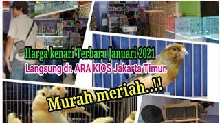 Download lagu Harga kenari semakin meroket saja‼️ Harga kenari terbaru 2021 dari Kios Tipar Jakarta timur.