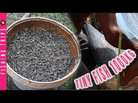 Survival Skills: Homemade Fish Traps Using Mosquito Net Fishing Trips Catch Tiny Fish A Lot